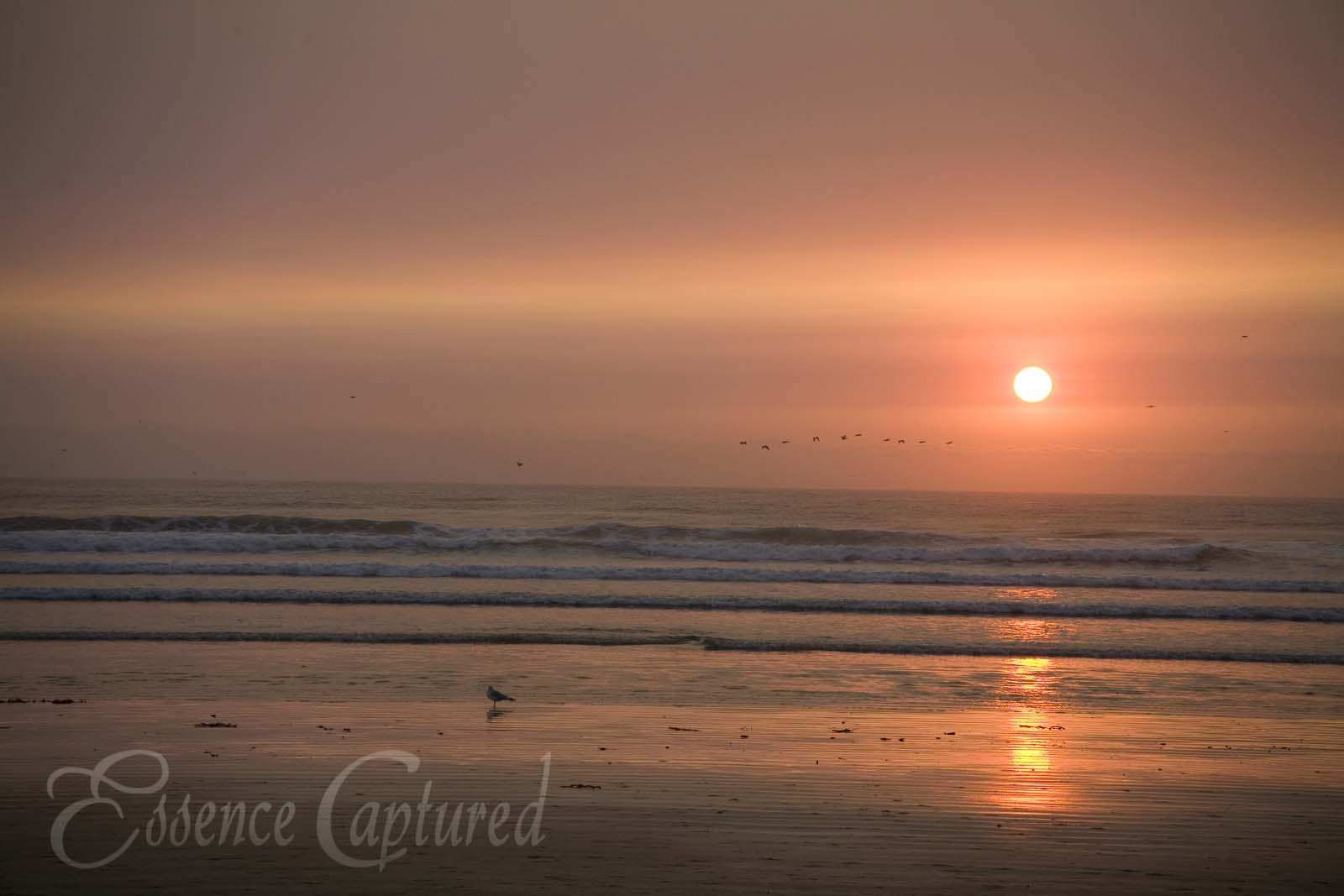 Pismo Beach Sunset Orange Sky Seagulls Pelicans Birds