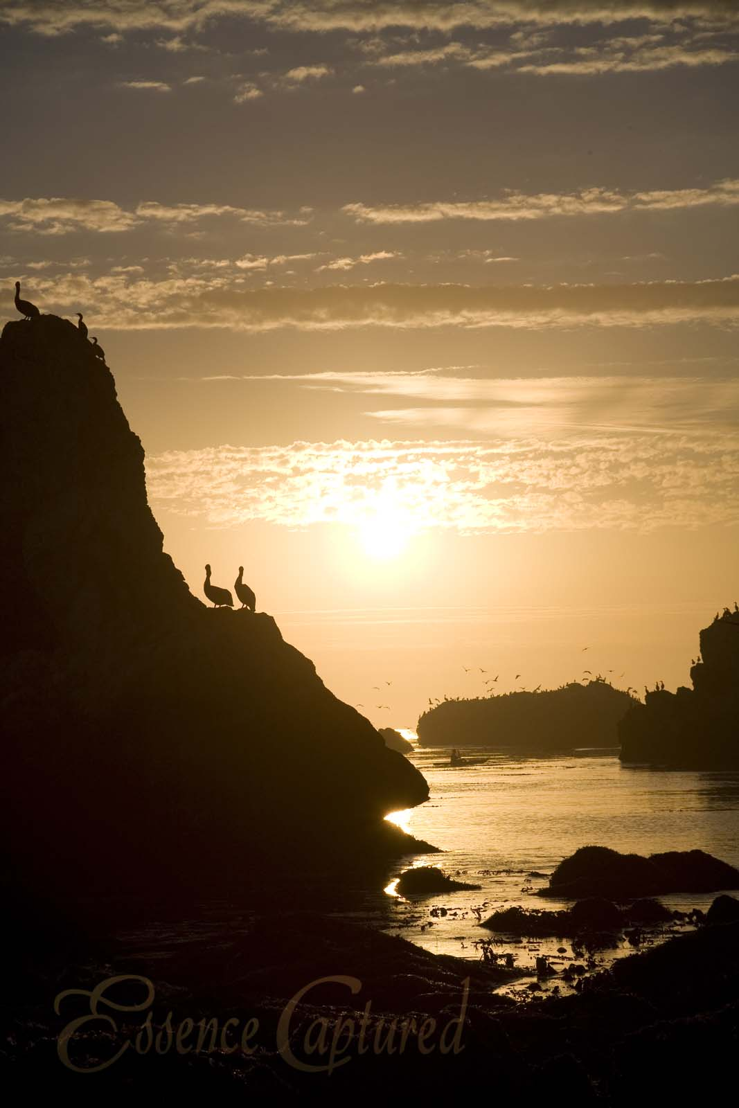 Shell Beach Sunset Rocks silhouetted pelicans kayaker golden orange vertical