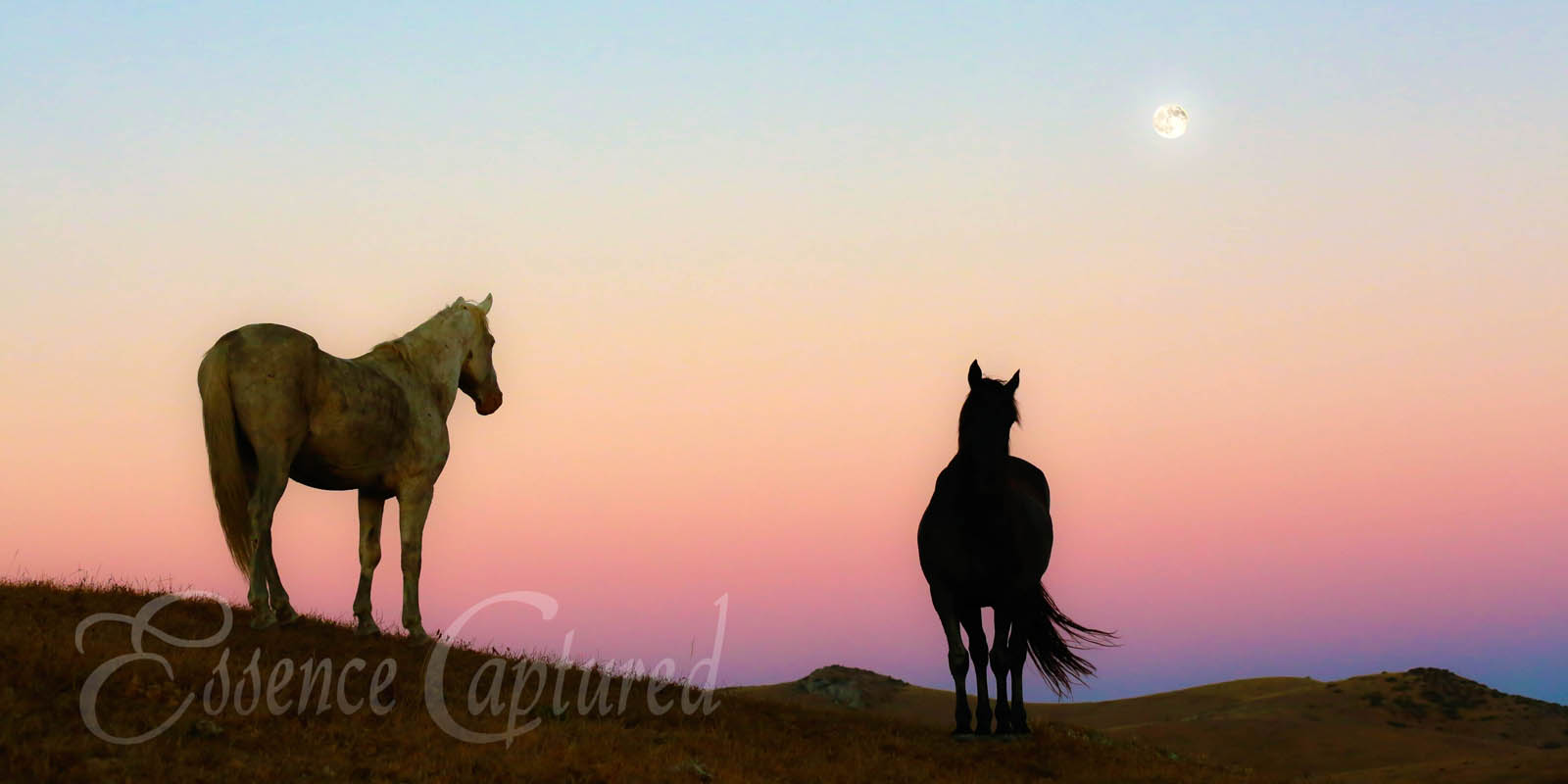 two horses silhouetted sunset pink orange blue sky full moon