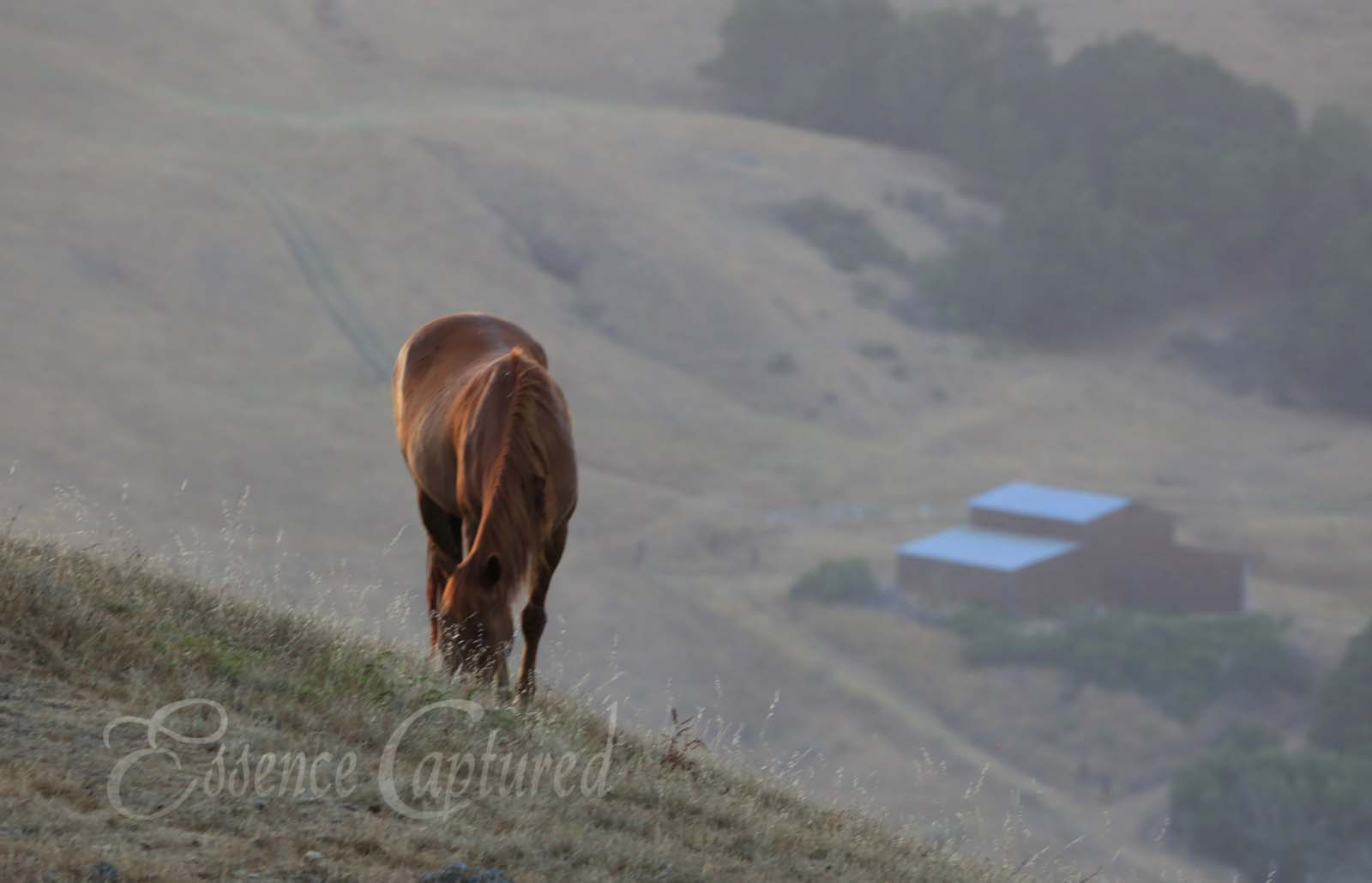 brown horse grazing on hillside with barn in valley below