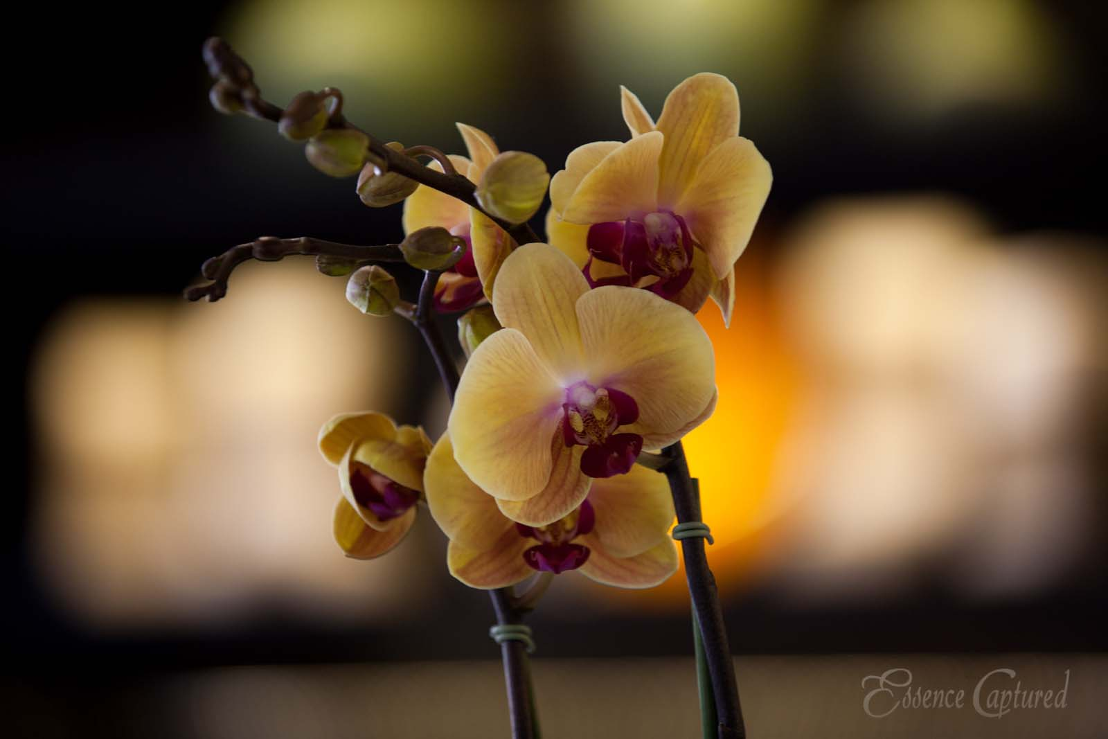 yellow orchid with red center blurry background