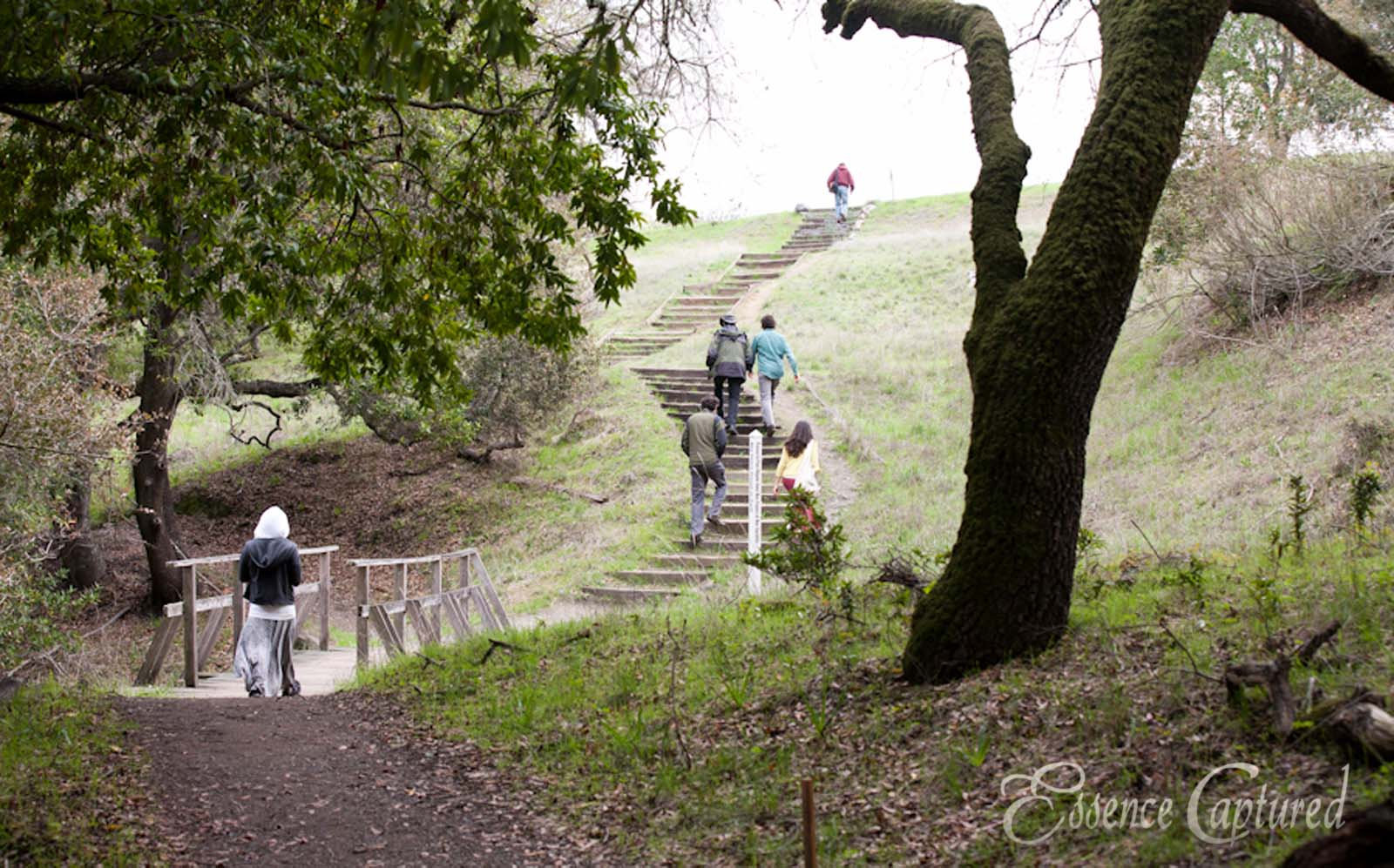 Earthrise retreat attendees walk on path through oak forest