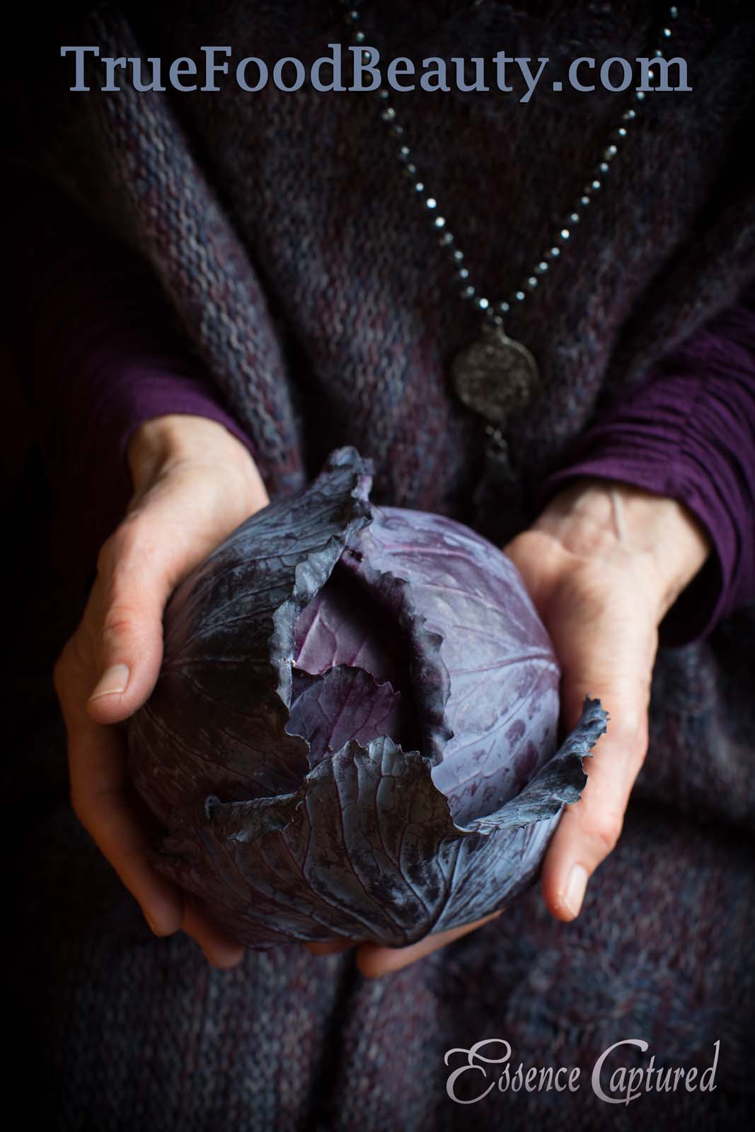 woman hands holding purple cabbage wearing purple clothing