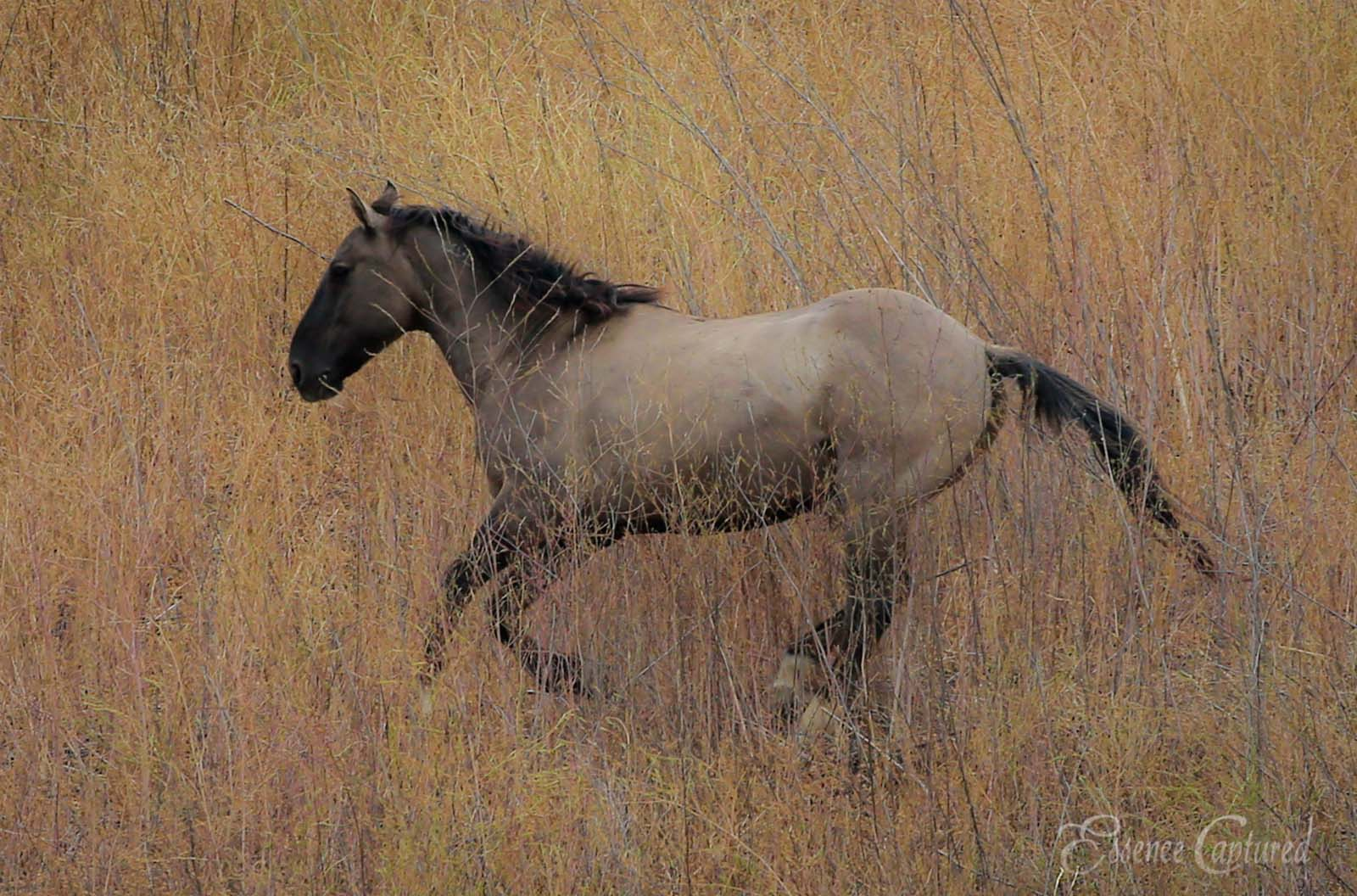 taupe colored horse running left on canvas of tall brush artistic