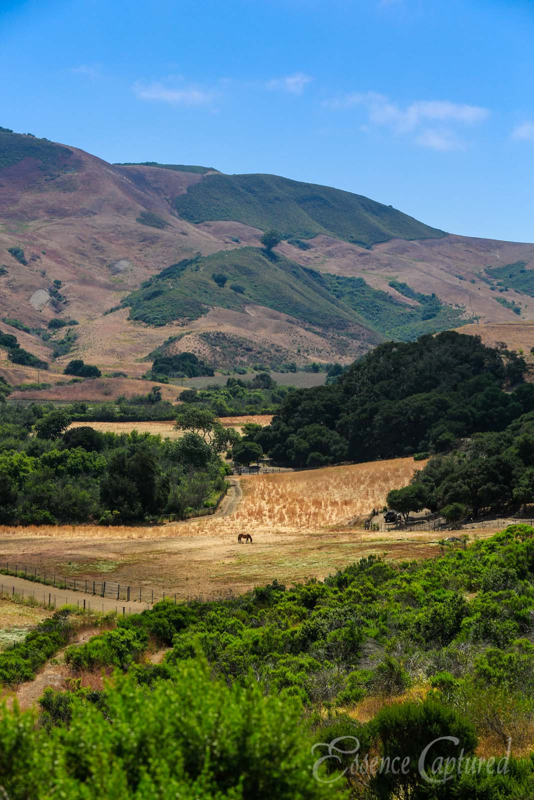 California central coast countryside featuring rolling hills fields of gold horse in pasture vertical