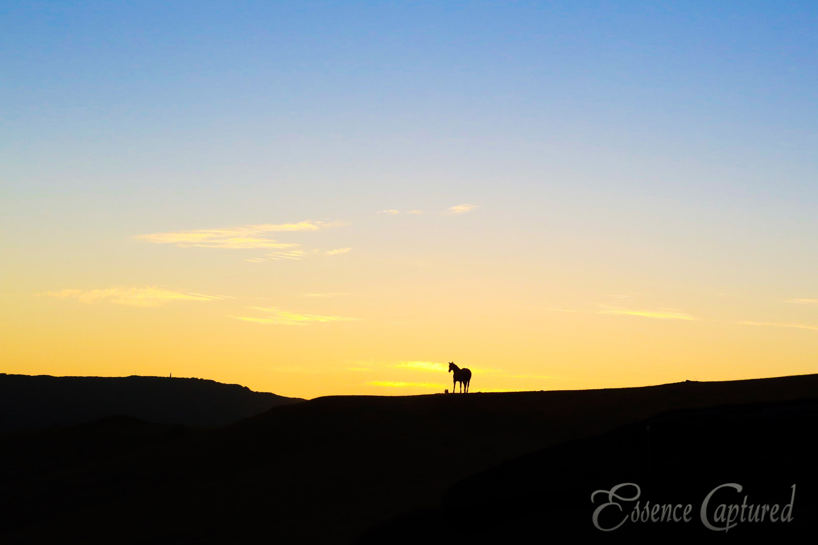 silhouette of horse at sunset yellow sky fade to blue foreground black
