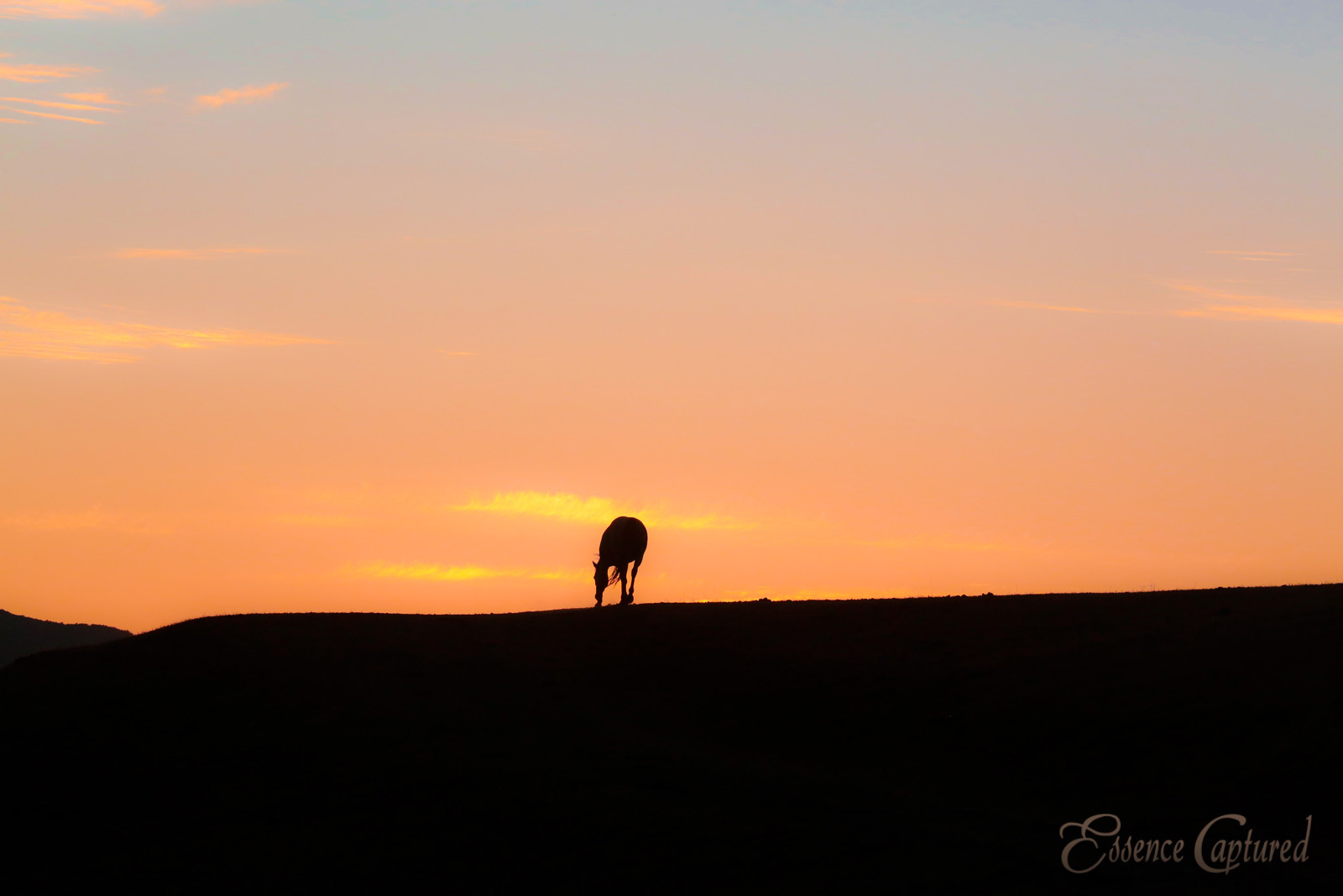 silhouette of horse grazing at sunset orange sky