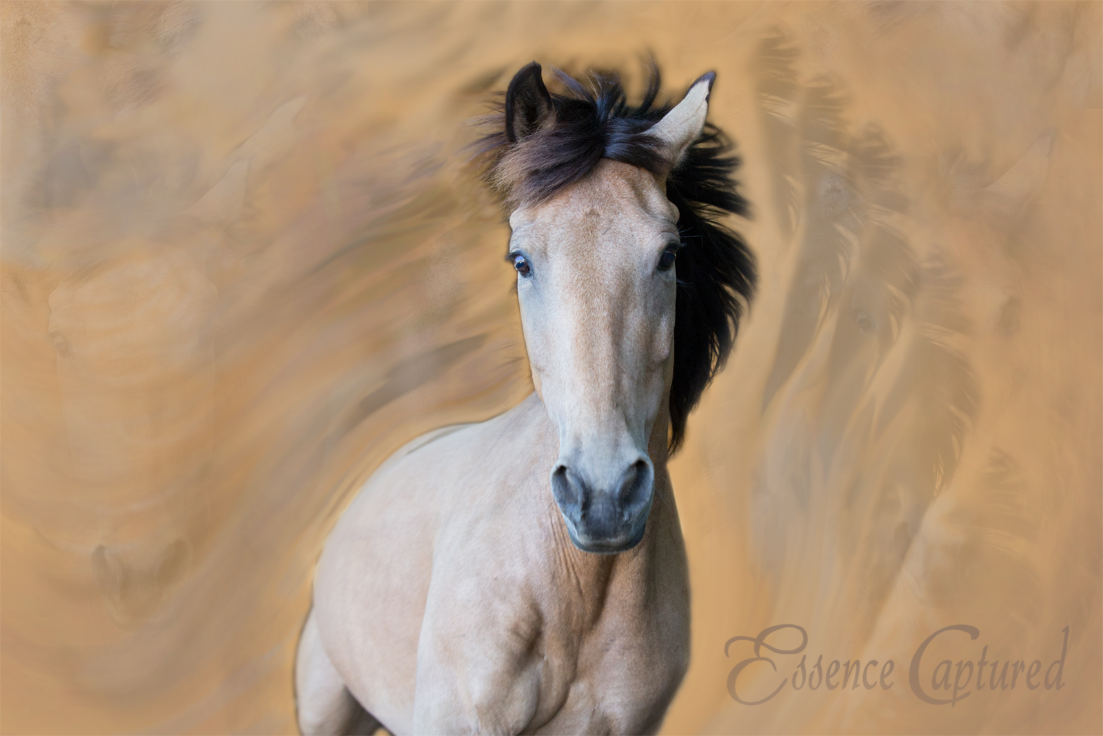 filly running toward camera with digitally painted background