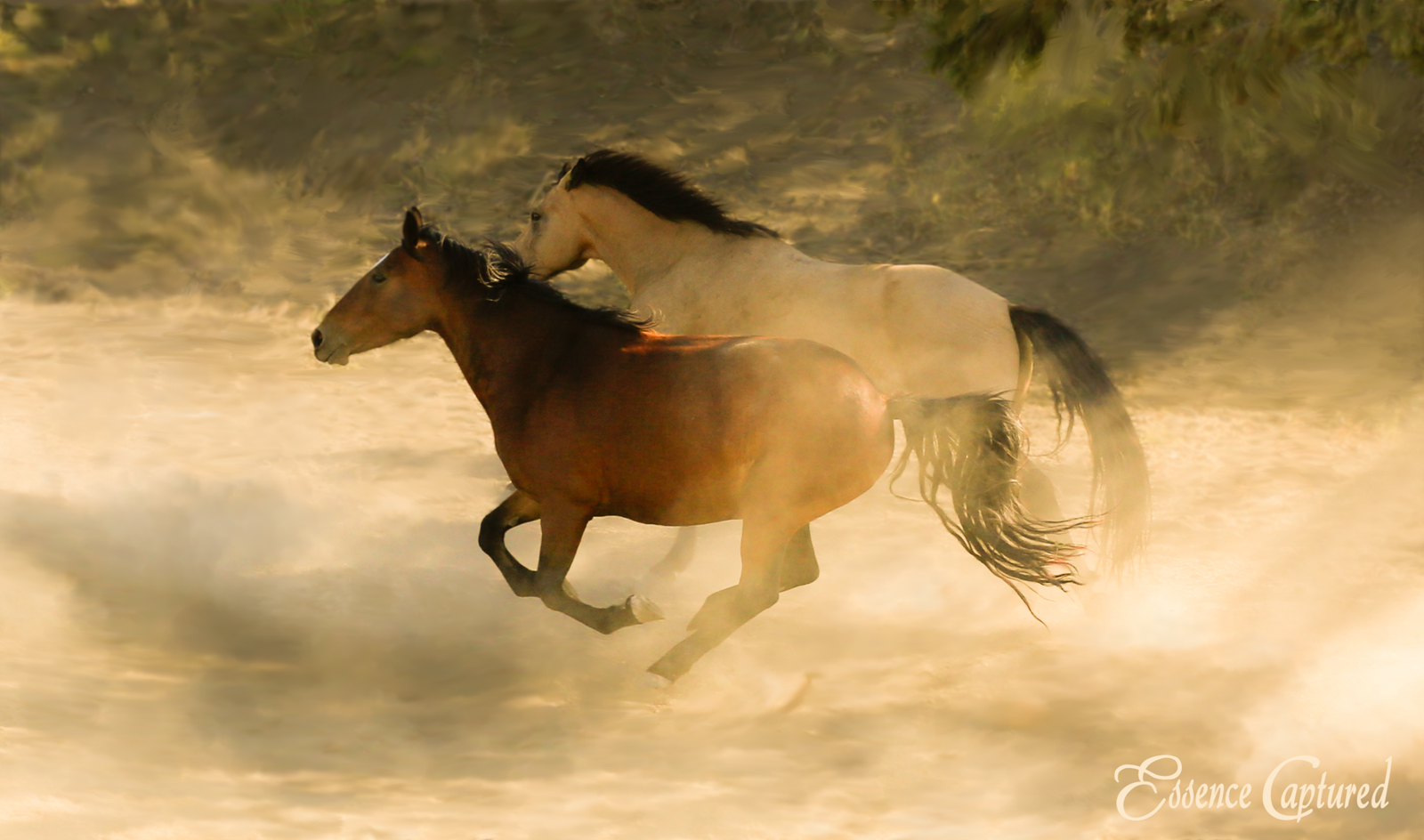 two horses running