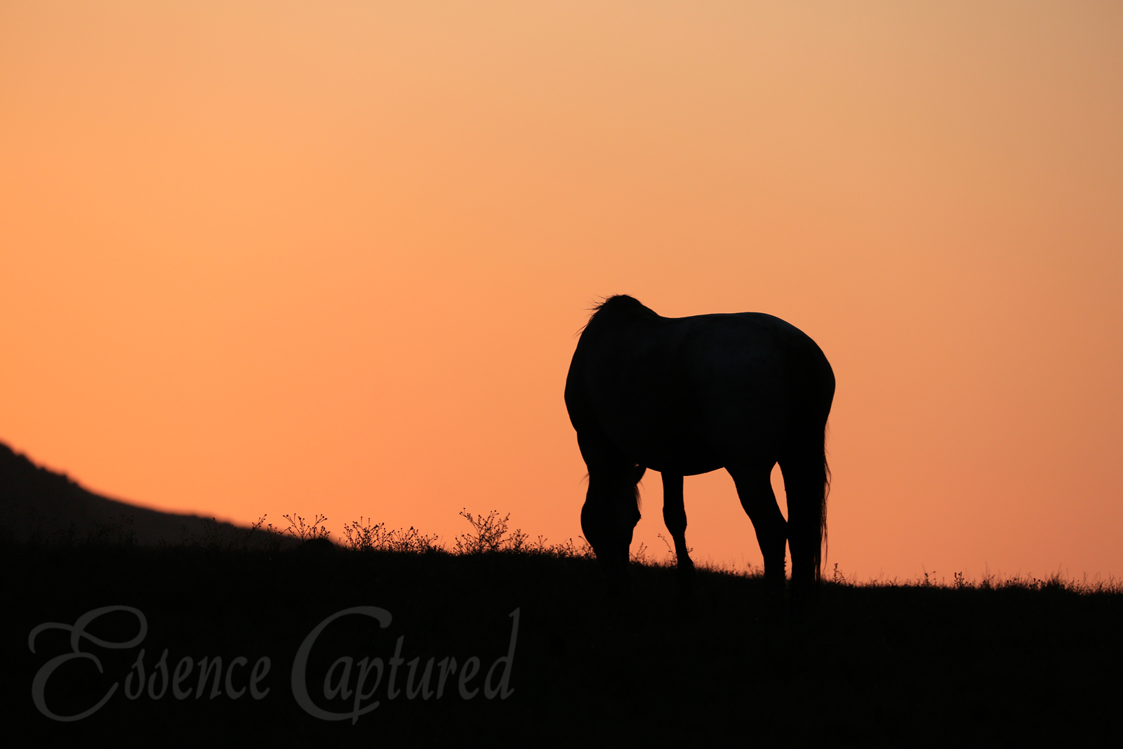 horse at sunset, orange sky