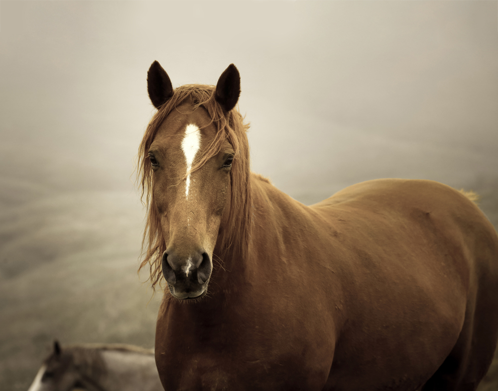 horse standing on hillside with mist, fog