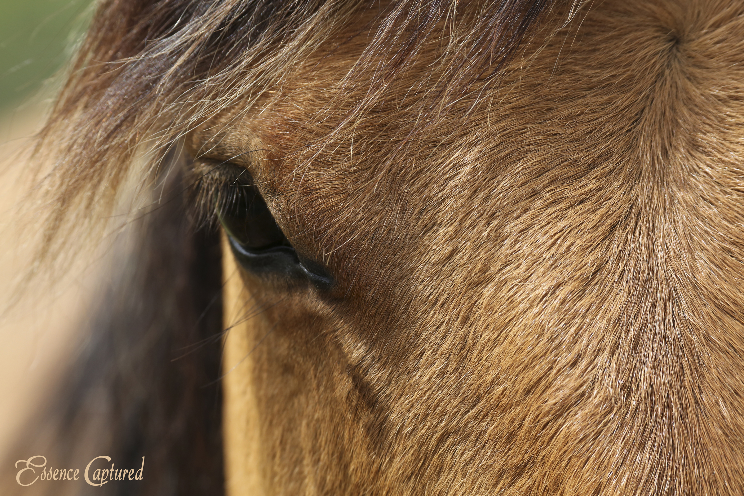 close up of horses eye