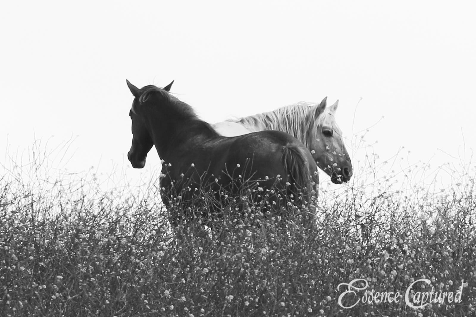 January 2020 Mustang Image