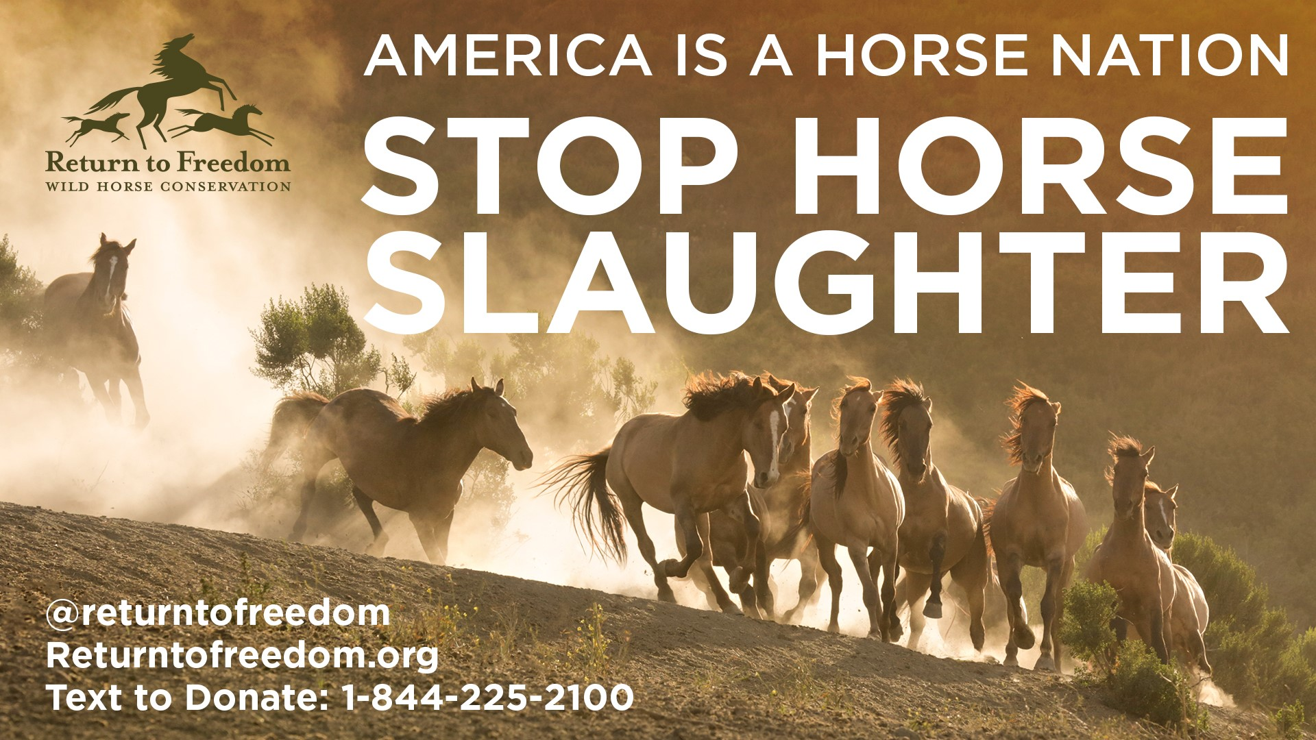 herd of horses with ad text